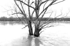 arbre-1